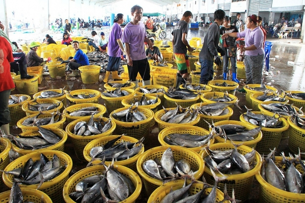 Longtail tuna for sale, Songkhla Fish Market, Thailand (2013). Photo: Duncan Leadbitter.